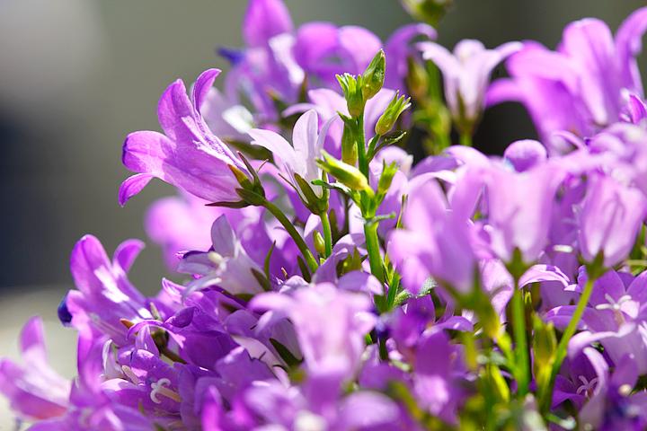 Purple flowers for centre piece