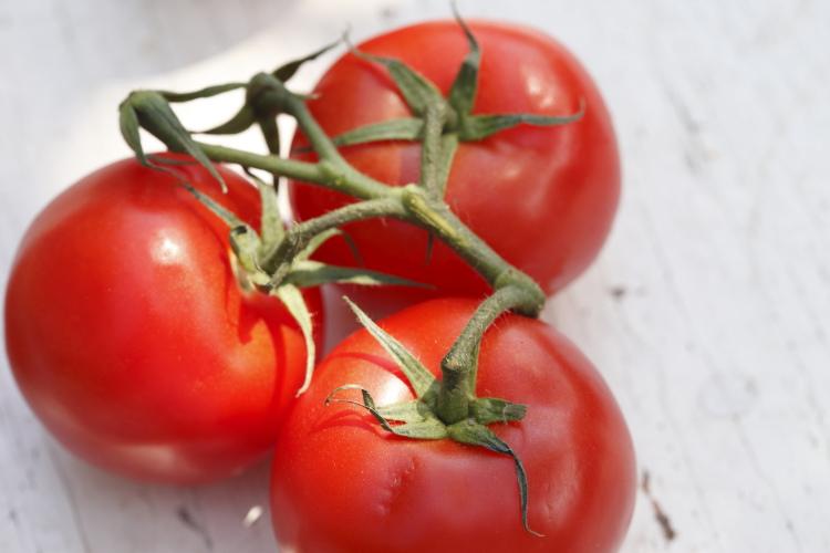Fresh Tomatoes | www.canolarecipes.ca