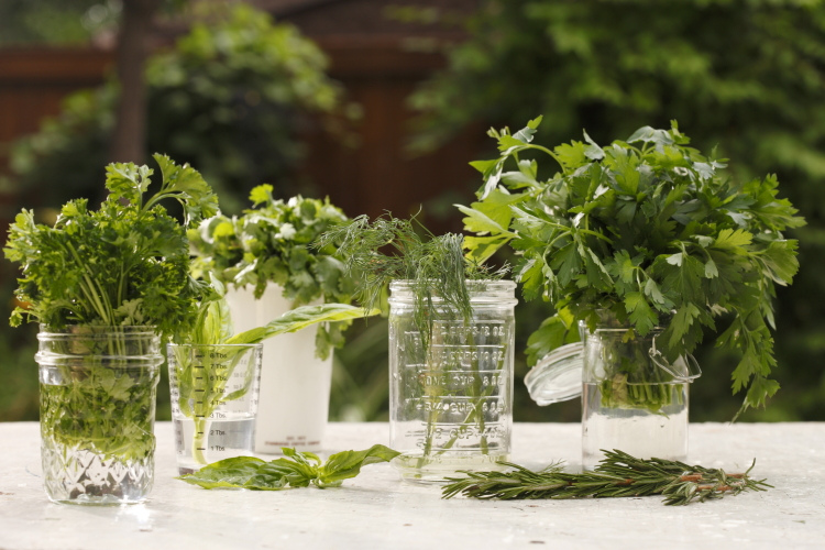 Fresh Herbs - Dill, Parsley, Cilantro, Basil, Rosemary