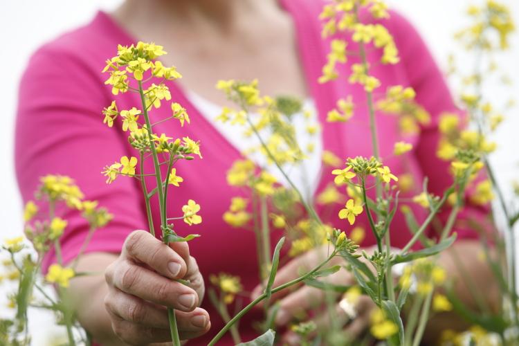 Female Farmer in canola field | www.canolarecipes.ca