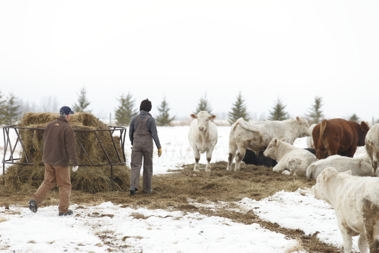 Farmers with cattle | www.canolarecipes.ca