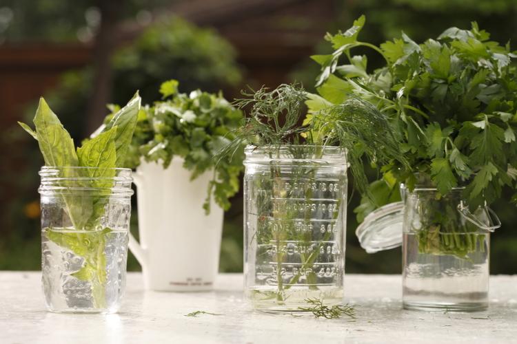 Herbs|www.canolaeatwell.com