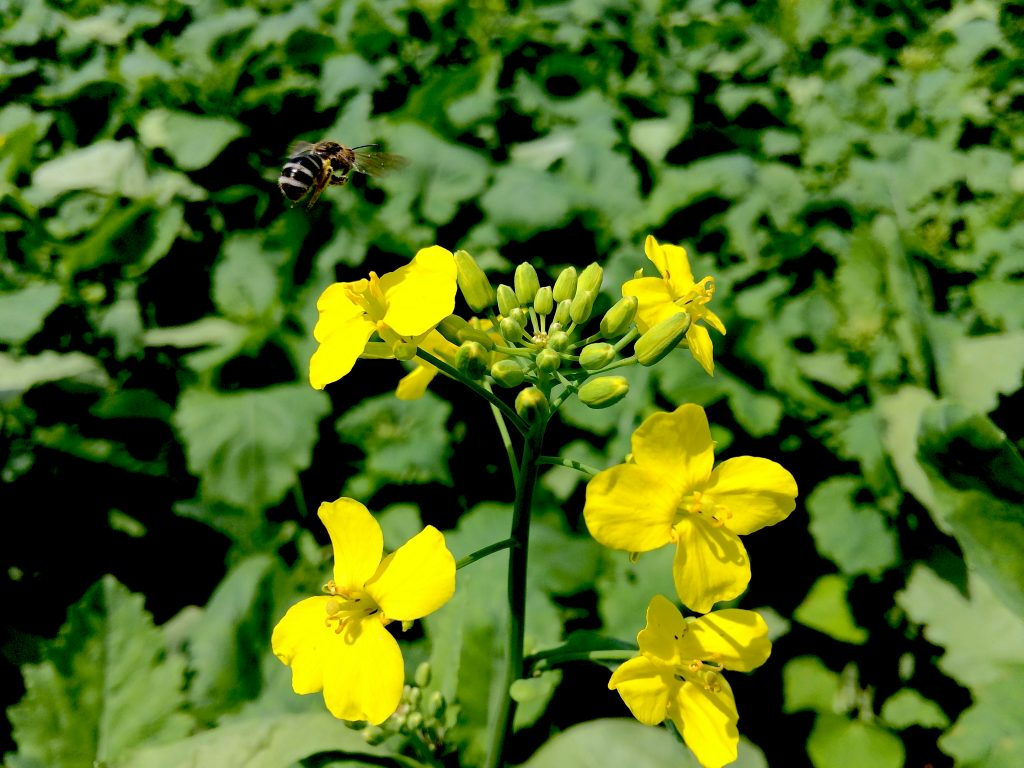 Canola and Bee | www.canolaeatwell.com