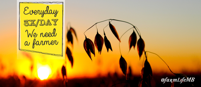 Oats ready to harvest against the setting sun by Simon Ellis | www.canolaeatwell.com