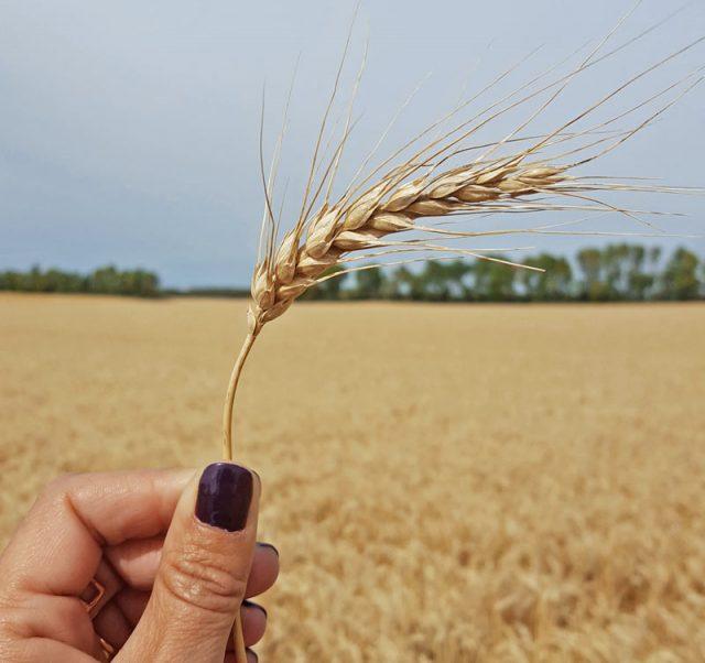 #CanolaConnect Harvest Camp Recap