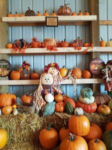 Ellen's Pumpkin Adventure | www.canolaeatwell.com