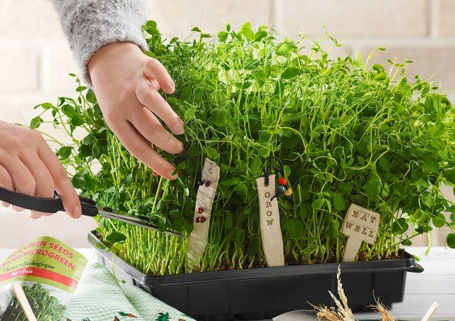 Ready to Grow: DIY Plant Stakes